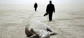 Rhino Season، موسم وحيد القرن